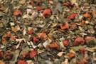 Erdbeer - Minze